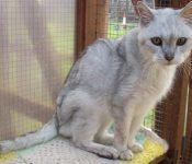 Điều trị và chăm sóc cho mèo thiếu canxi sao cho hiệu quả