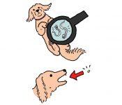 Chó Bị Giun Đũa | Dấu Hiệu Nhận Biết Chó Bị Giun Đũa