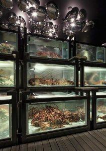 thiết kế bể chứa hải sản